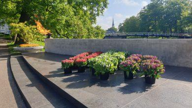 Photo of Zwollenaren herdenken met actie 'Bloemen voor 4 mei'