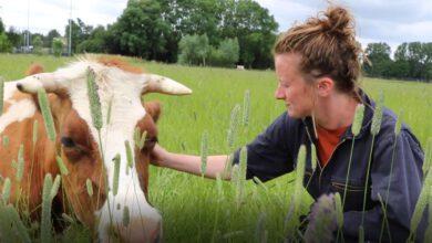 Photo of Verse melk tappen bij de Dijklandhoeve rechtstreeks uit de wei bij de Aa-landen