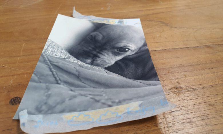 Photo of De foto van Myrthe Zintel