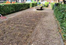 Photo of Aangetaste buxushaag maakt tijdelijk plaats voor extra terrasruimte
