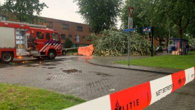 Photo of Vrouw om het leven gekomen door omgevallen boom aan de Drapenierlaan in Stadshagen