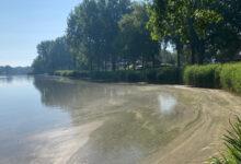 Photo of Blauwalg in 'Wavin-vijver', Wijde Aa en Milligerplas in Zwolle