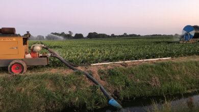 Photo of Waterschap beperkt gebruik slootwater voor sproeien akkers