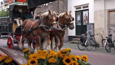 Photo of Strippenkaart en plattegrond wijzen bokbier liefhebbers de weg  in Zwolle