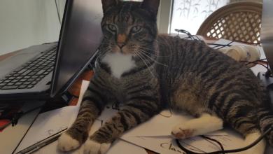 Photo of Vermiste en gevonden huisdieren week 36 Amivedi Zwolle