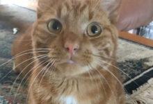 Photo of Vermiste en gevonden huisdieren week 38 Amivedi Zwolle