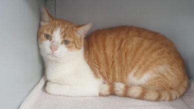 Photo of Vermiste en gevonden huisdieren week 37 Amivedi Zwolle