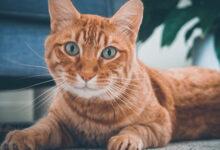 Photo of Vermiste en gevonden huisdieren week 42 Amivedi Zwolle