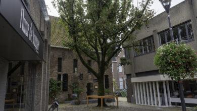 Photo of AtelierOverijssel: De boom heeft meer waarde dan je denkt