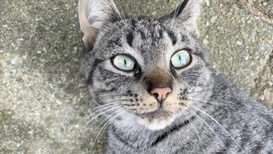 Photo of Vermiste en gevonden huisdieren week 41 Amivedi Zwolle
