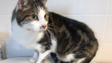 Photo of Vermiste en gevonden huisdieren week 43 Amivedi Zwolle