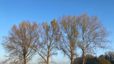 Photo of Zin in een groene klusochtend langs de IJssel?