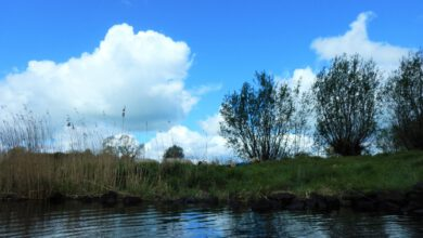 Photo of Groen langs het Zwartewater