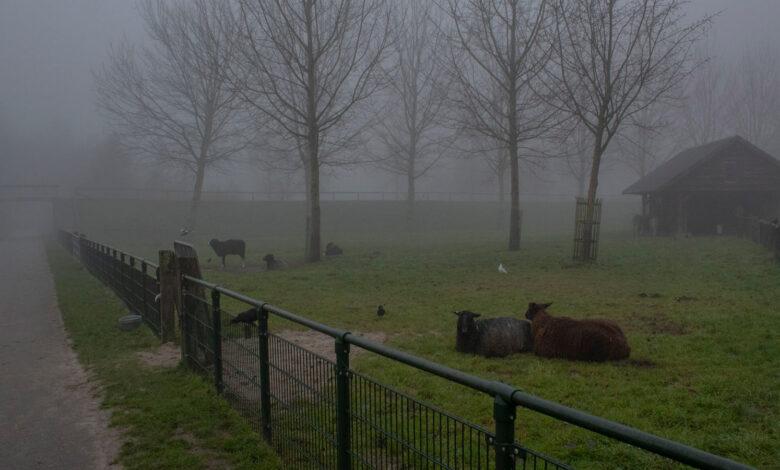Photo of Informatie gevraagd over oude kinderboerderij