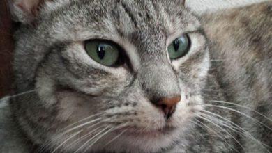 Photo of Vermiste en gevonden huisdieren week 51 Amivedi Zwolle