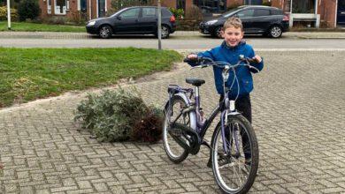 Photo of Nu al ruim 8000 kerstbomen ingeleverd