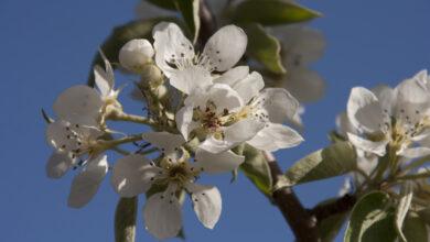 Photo of Cursus fruitbomen snoeien vanuit landschap Overijssel
