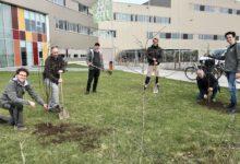 Photo of 20 Bedrijven nemen het voortouw en planten 150 bomen