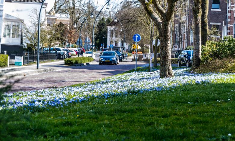 Photo of De bloemen schieten de grond uit