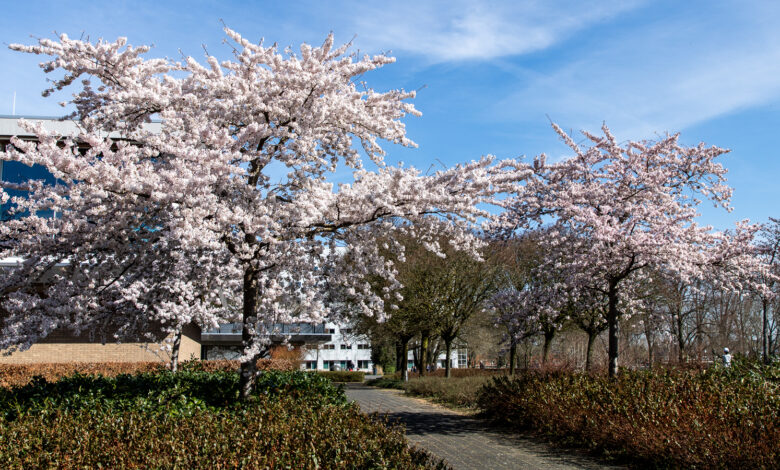 Photo of De lente is zichtbaar, ook bij het provinciehuis