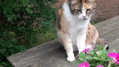 Photo of Vermiste en gevonden huisdieren Amivedi Zwolle