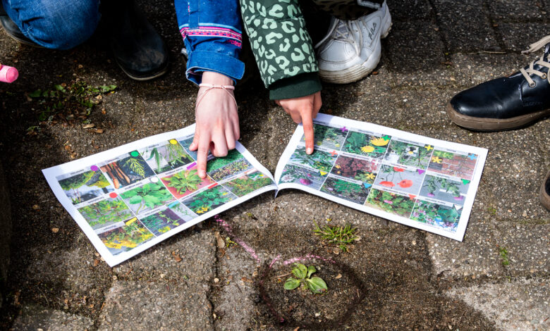 Photo of Buitenlesdag: Kinderen de Schatgraver ontdekken waardevolle stoepplantjes op het schoolplein
