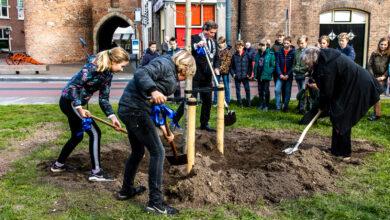 Photo of Anne Frank-boom geplaatst aan Van Nahuysplein