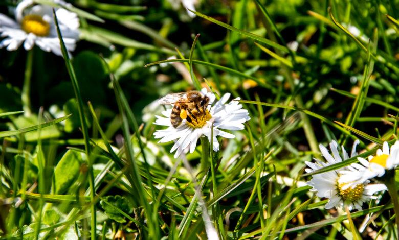 Photo of Dit weekeinde worden bijen geteld