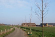 Photo of Gemeente plant 85 nieuwe populieren aan Aalvangersweg