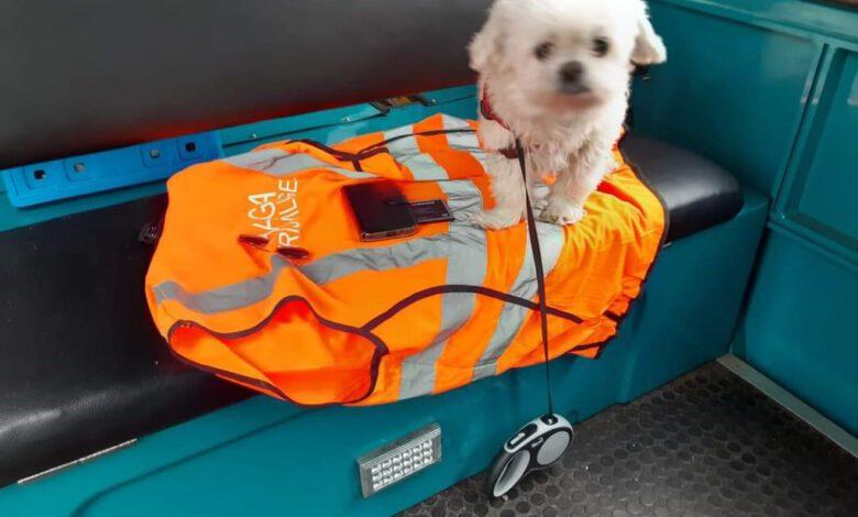 Photo of Hondje Lyla achtergelaten in pendelbus Isala Zwolle, wie herkent het hondje?