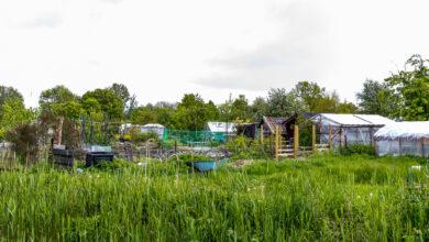 Photo of SP vraagt om steun gemeente voor getroffen Aa-tuinen