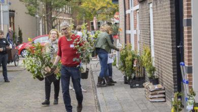 Photo of Maak je straat groen tijdens Burendag