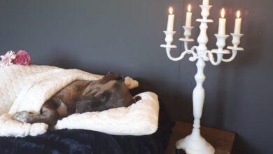 Photo of Waardig afscheid voor dood gevonden hond met vastgebonden voorpoten