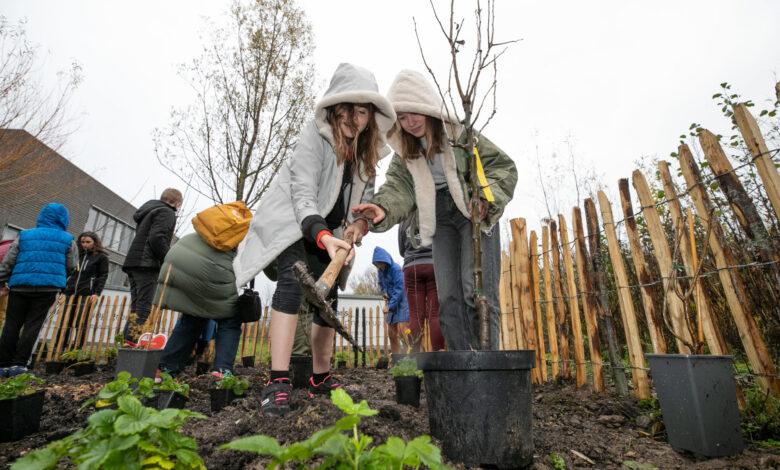 Photo of Provincie Overijssel stelt 50.000 euro beschikbaar voor meer eetbaar groen op openbare plekken