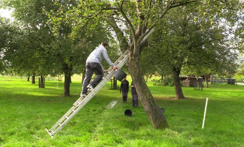 Photo of Leren door doen op de Thorbecke Zo maak je appelsap!
