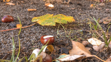 Photo of Kans op regen en matige wind