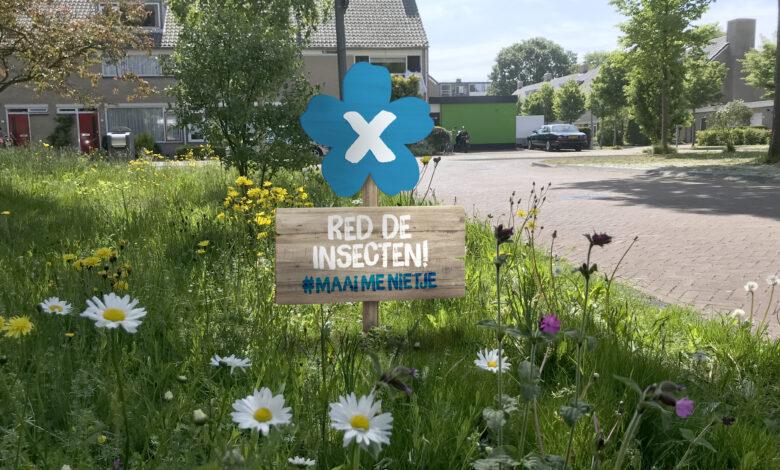 Photo of Natuurmonumenten prijst insectvriendelijker groenbeheer: gemeente Zwolle meest insectvriendelijke gemeente