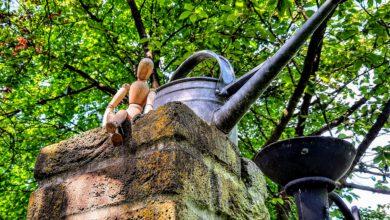 Photo of Met Nature Bits ontdek je de stadsnatuur van Zwolle door je smartphonelens