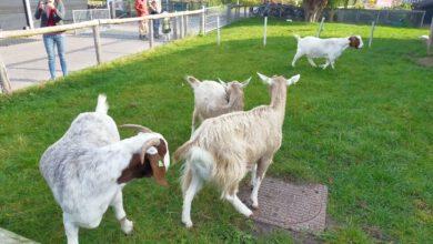 Photo of Geslaagde dierendagactiviteiten DierenTeam Zwolle