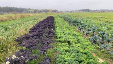 Photo of Boerin verbouwt biologische groenten tussen twee woonwijken in